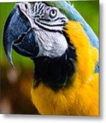 Duke Macaw Metal Print
