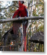 Macaw Guatemala Metal Print