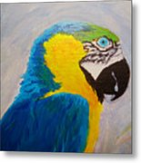 Macaw Head Metal Print