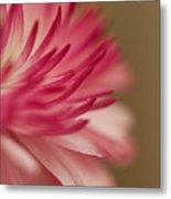 Macro - Pink Flower Metal Print