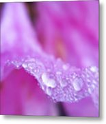 Macro Art - Primary Focus Metal Print