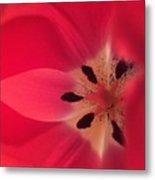 Macro Beauty Tulip Metal Print