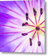 Macro Closeup Of A Purple Flower Stamen Metal Print