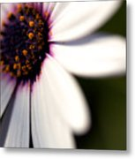 Macro Daisy One Metal Print