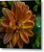 Macro Of Dahlia Flower Metal Print