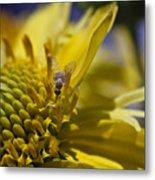 Macro Pollinating Fly Metal Print