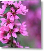 Macro Purple Flower Metal Print