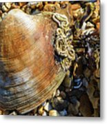 Macro Shell Metal Print