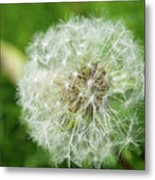 macro shot of a beautiful Dandelion. Metal Print