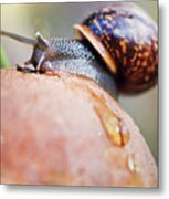 Macro World Metal Print