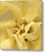 Macro Yellow Rose Metal Print