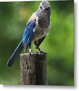 Mad Bird Metal Print
