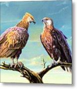 Madagascar Fish Eagle  Metal Print