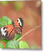 Madiera Butterflies Metal Print