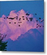 Magenta Dream Metal Print