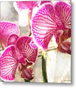 Magenta Orchids Metal Print