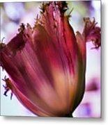 Magenta Tulip Metal Print