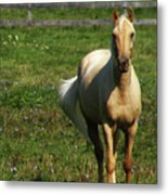 Maggie - Michigans Morning Breeze Metal Print