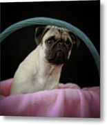 Maggie In A Basket Metal Print