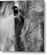 Maggie The Cow Abstract Metal Print
