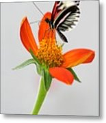 Magical Butterfly Metal Print