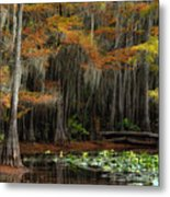 Magical Cypress Trees Forest Metal Print