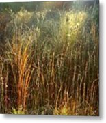 Magical Light On The Marsh Metal Print