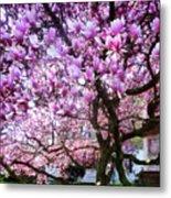 Magnificant Magnolias Metal Print