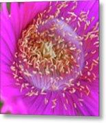 Magnificent Flower Metal Print