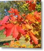 Magnificent Maple Leaves Metal Print