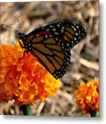 Magnificent Monarch Metal Print