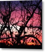 Magnificent Sunset And Trees Metal Print