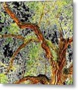 Magnificent Tree Metal Print