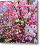 Magnolia Beauty #15 Metal Print