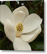 Southern Magnolia Bloom Metal Print