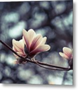 Magnolia Blossom 2 Metal Print