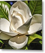 Magnolia Blossom 4 Metal Print