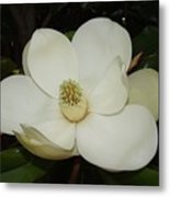 Magnolia Blossom 5 Metal Print