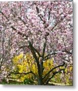 Magnolia Blossoms Galore Metal Print