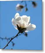 Magnolia Flower Tree Art Prints Blue Sky Floral Baslee Troutman Metal Print