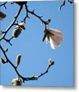 Magnolia Flowers Budding Art Prints Spring Floral Baslee Troutman Metal Print