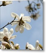 Magnolia Flowers White Magnolia Tree Art 2 Blue Sky Giclee Prints Baslee Troutman Metal Print