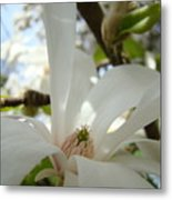 Magnolia Flowers White Magnolia Tree Flower Art Spring Baslee Troutman Metal Print