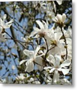 Magnolia Flowers White Magnolia Tree Flowers Art Prints Metal Print