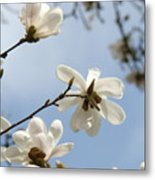 Magnolia Flowers White Magnolia Tree Spring Flowers Artwork Blue Sky Metal Print