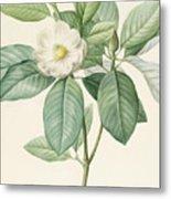 Magnolia Glauca Metal Print