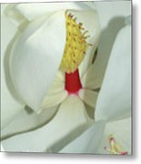 Magnolia Grace And Beauty Metal Print