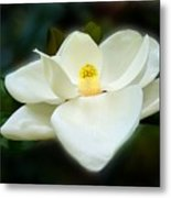 Magnolia In Color Metal Print