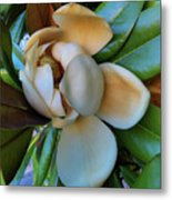 Magnolia In Oxford Metal Print