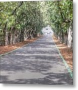 Magnolia Lane Metal Print